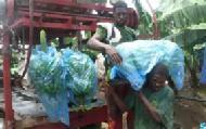 L actualit et les luttes des ouvriers agricoles affili s for Chambre d agriculture martinique